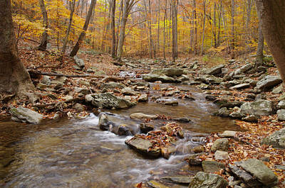 Catoctin Stream Art Print by Robert Geary