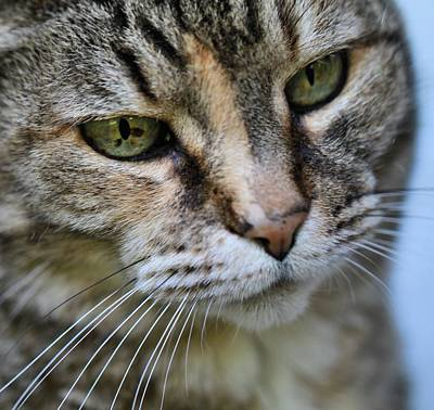 Catnip Photograph - Cat's Eyes by Dan Sproul