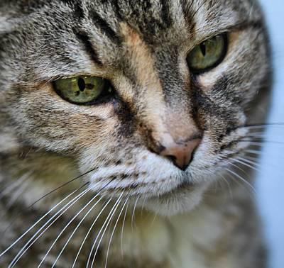 Cat's Eyes Art Print by Dan Sproul