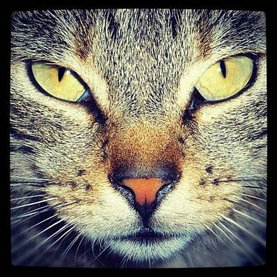 Pet Photograph - Cat's Eyes by Emanuela Carratoni