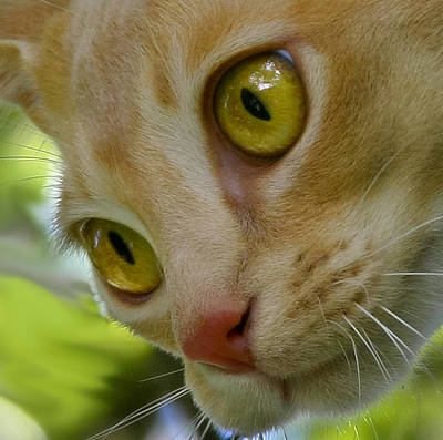 Photograph - Cats Eyes by Jenny Setchell