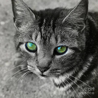 Photograph - Cat's Eyes by Judi Bagwell