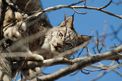 Photograph - Cat's Eyes by Ted Raynor
