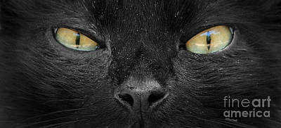 Photograph - Cats Eyes by Terri Mills