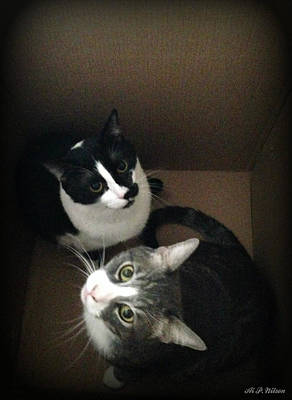 Photograph - Cats In The Box by Ai P Nilson