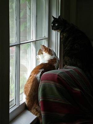 Photograph - Cats In Window by Sharon Popek