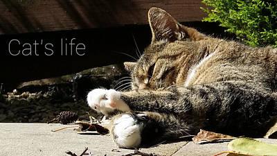 Photograph - Cat's Life 2 by Pedro Fernandez