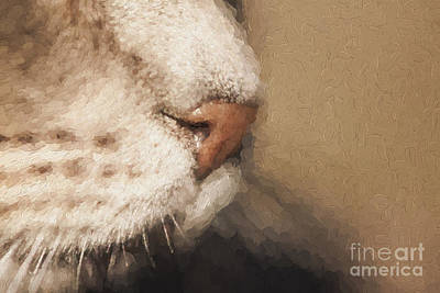 Of Cats Photograph - Cats Nose by Avalon Fine Art Photography