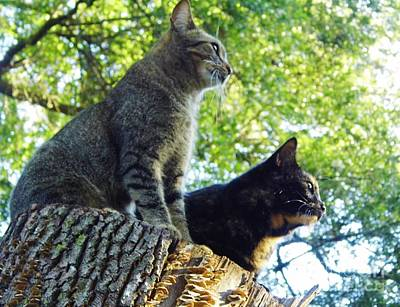 Photograph - Cats On A Stump by D Hackett