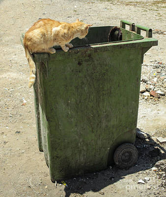 Homeless Pets Photograph - Cats On And In Garbage Container by Patricia Hofmeester