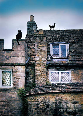 Photograph - Cats On Stone Houses by Jill Battaglia