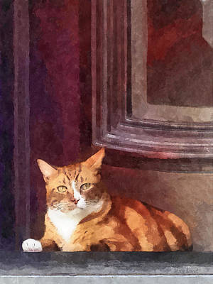 Photograph - Cats - Orange Tabby In Doorway by Susan Savad