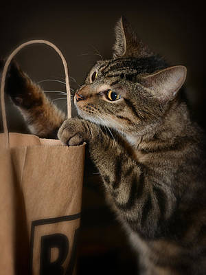 Photograph - Cats Out Of The Bag by Dennis James