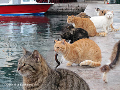 Hydra Island Photograph - Cats Waiting The Fish by Alexandros Daskalakis