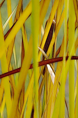 Photograph - Cattail 1 by Albert Seger
