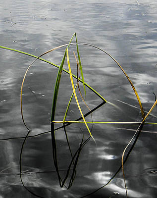 Photograph - Cattail Design by Christy Usilton