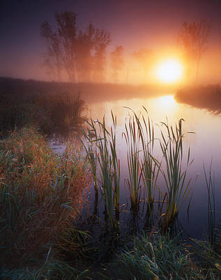 Photograph - Cattail Fog by Ray Mathis