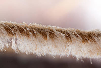 Daysray Photograph - Cattail Remants by Fran Riley