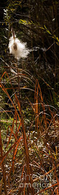 Unicorn Dust - Cattail Seeds by J L Woody Wooden