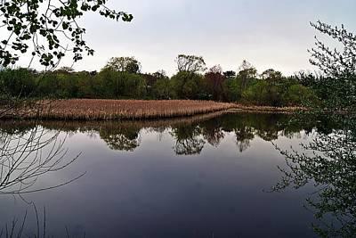Photograph - Cattail Swamp I by Joe Faherty