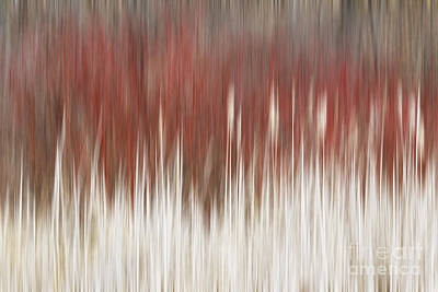 Photograph - Cattails And Dogwood by Barbara McMahon