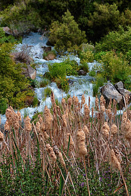 Photograph - Cattails And Waterfalls by Christy Patino
