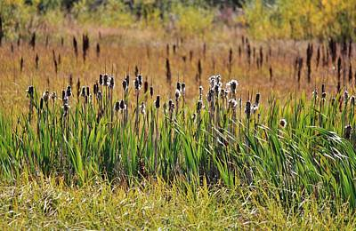 Photograph - Cattails In Autumn by Diane Alexander