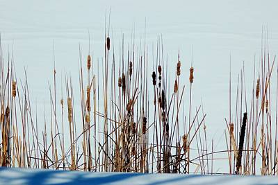 Photograph - Cattails In Snow by Dakota Light Photography By Dakota