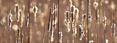 Photograph - Cattails In The Light by Leda Robertson