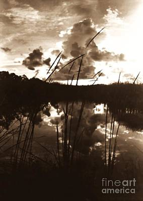 Photograph - Cattails by Joseph Wetzel