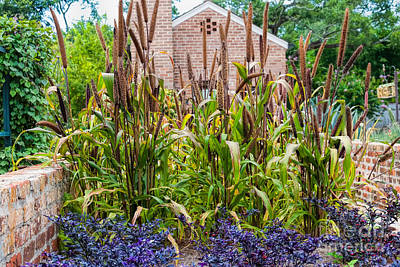 Photograph - Cattails  by Kathleen K Parker