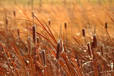 Art Print featuring the photograph Cattails  by Lynn Hopwood