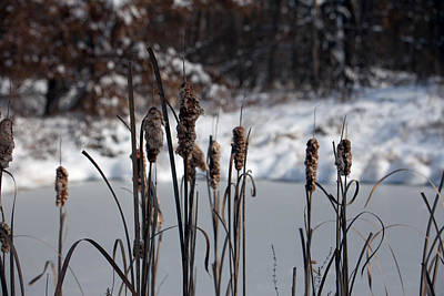 Photograph - Cattails by Scott Sanders