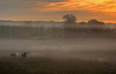 Photograph - Cattle At Daybreak by Jim Vance