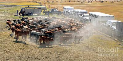 Alvord Desert Wall Art - Photograph - Cattle Branding Harney County Oregon by Michele AnneLouise Cohen