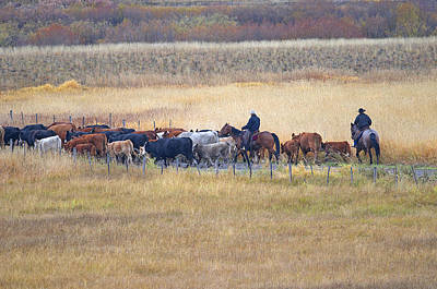 Photograph - Cattle Drive 2a by Sharon Talson