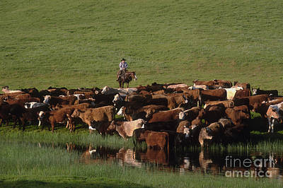 Cattle Drive Photograph - Cattle Drive In Rural California by Ron Sanford