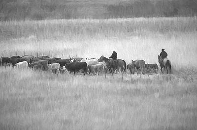 Photograph - Cattle Drive by Sharon Talson