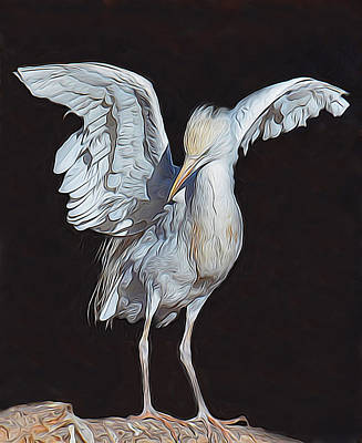 Cheyenne Mountain Zoo Photograph - Cattle Egret by Diane Alexander