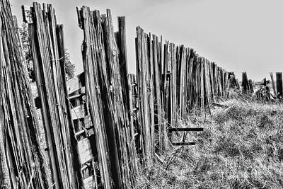 Photograph - Cattle Fence By Diana Sainz by Diana Raquel Sainz
