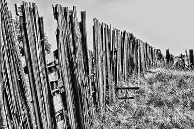 Photograph - Cattle Fence By Diana Sainz by Diana Raquel Sainz