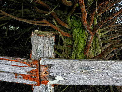 Photograph - Cattle Fence by Kathleen Bishop