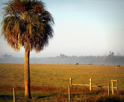 Photograph - Cattle Grazing On Foggy Morning 2 by Sheri McLeroy