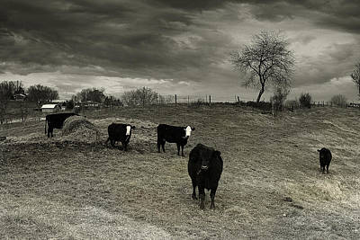 Photograph - Cattle In The Winter Pasture Series Image 2 by Gray  Artus