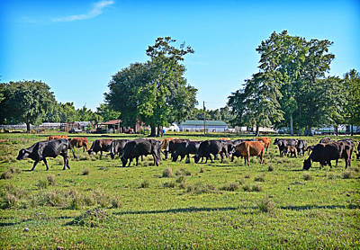 Photograph - Cattle by Linda Brown