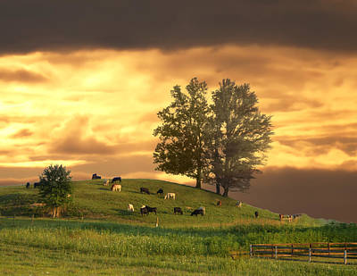 Cattle On A Hill Art Print