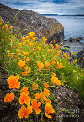 Northwest Photograph - Cattle Point Poppies by Inge Johnsson