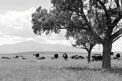 Photograph - Cattle Ranch In Summer by Clarice  Lakota