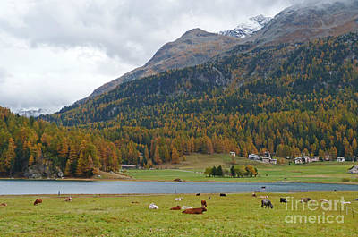 Photograph - Autumn At Silvaplanersee  - Switzerland by Phil Banks