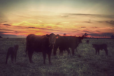 Red Angus Cow Photograph - Cattle Sunset by Thomas Zimmerman